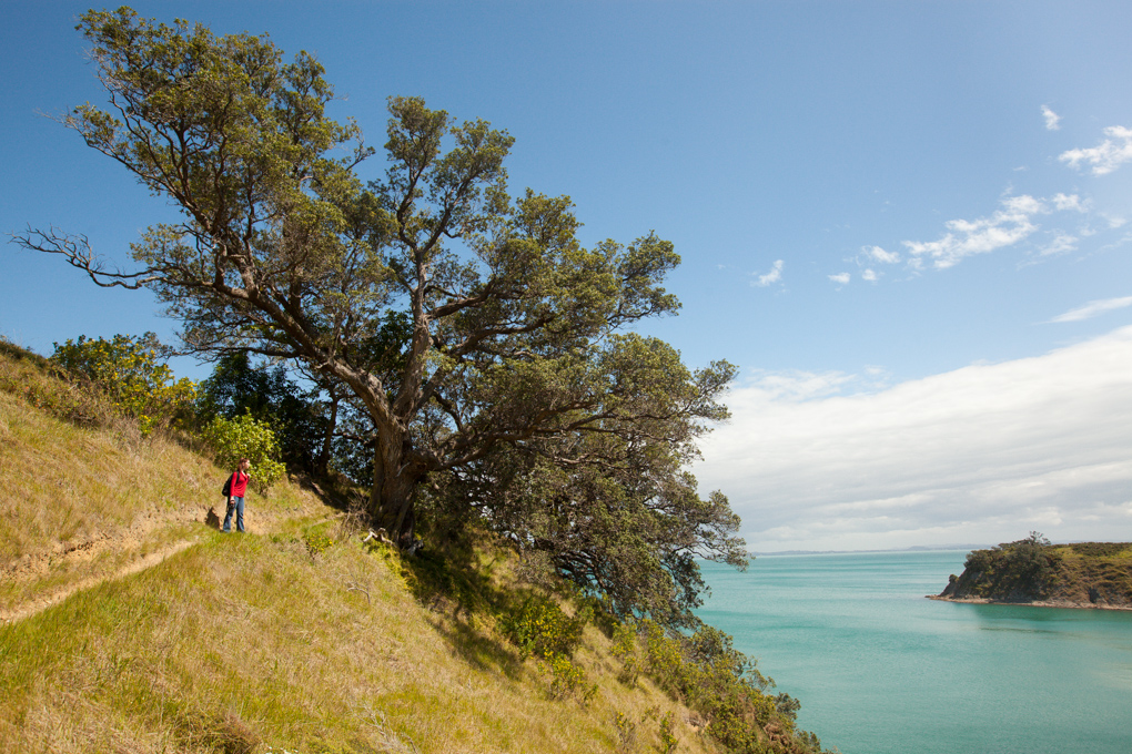 Hitapa Bay Walkway to Te Whau Vineyards, Waiheke Island, Auckland, New Zealand.
