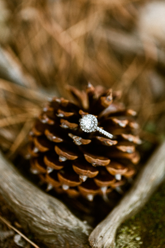 round cut diamond halo engagement ring on a pinecone